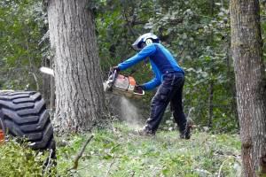 abattage arbre eure et loir