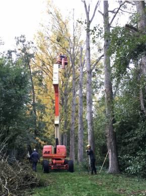 elagage-arbre-yvelines-78